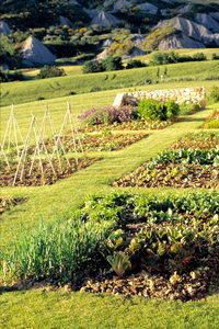 Tuscookany's Organic vegetable garden at Bellorcia.jpg