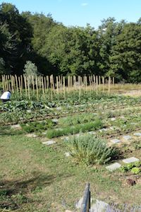 Tuscookany's organic vegetable orchard at Torre del Tartufo