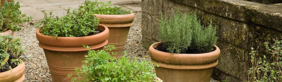 Tuscookany herb pots at the Casa Ombuto cooking school in Tuscany