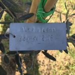 22-6-15 The Tuscookany nurture Program Olive tree donated 22 June 2015 planted in Torre Del Tartufo