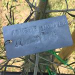 27-6-15 The Tuscookany nurture Program Olive tree donated 27 June 2015. planted in Torre Del Tartufo