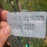 17-9-17 The Tuscookany nurture Program Olive tree donated 17 Sep. 2017 planted in Torre del Tartufo