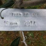 16-8-14 The Tuscookany nurture Program Olive tree donated on 16 August 2014 planted in Casa Ombuto
