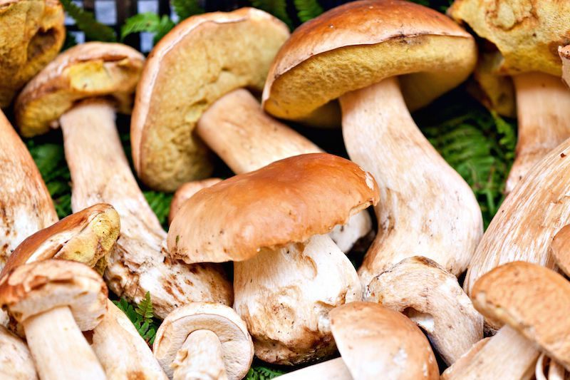 Are you wild about mushrooms? Get to know these wild mushrooms!